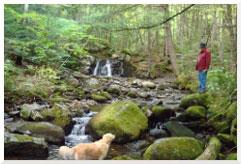 bdr forest1